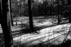 Ice, Light, and Shadow (Northern Wolf Photography) Tags: 14140mm 14mm em5 forest frozen ice light middlesexfells monochrome olympus pond shadow statereservation trees winter woods stoneham massachusetts unitedstatesofamerica us