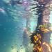 St Leonards Pier Underwater-31