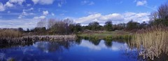 Blue above and below (Sundornvic) Tags: water rushes trees pool sky blue reflected reflection clouds light sunshine