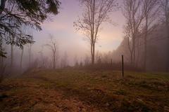 Herbstwald im Hochnebel am Grandsberg (MikeSolfrank) Tags: none herbst autumn nebel mist light lichtstimmung tree bäume berg wood forest bayern bavaria outside nature art sky winter