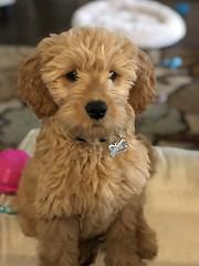Hi I'm Cooper