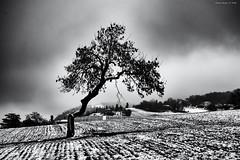Resilienza - Resilience (alfapegaso) Tags: neve inverno albero