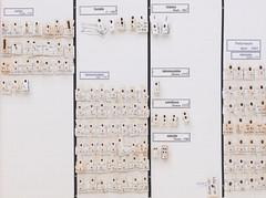 coleoptera-coccinellidae-coccinellinae-div-L2-5641 (nmbeinvertebrata) Tags: ccbync nmbe5641 64115 coleoptera coccinellidae coccinellinae l2
