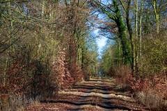 Forest road - Waldweg (b_kohnert) Tags: natur nature landscape landschaft trees baum forest wald waldweg forestroad