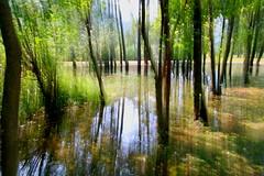 Riflessi presso il Lago di Cavazzo (Carnia) (dibi54) Tags: riflessi alberi acqua pozzanghera lago mosso creativo