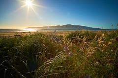NZ Travels  - Paraparaumu Beach 02 (ArdieBeaPhotography) Tags: paraparaumubeach kapiti island coast shore beach sand haretails bunnytails grassseed dunegrass flax driftwood sunset sun lensflare dune pacific ocean sea glitter reflection