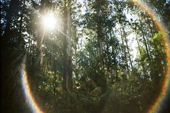 Lens flare in the forest (Matthew Paul Argall) Tags: kodak335 fixedfocus focusfree 35mmfilm kodakultramax400 kodak400 ultramax 400isofilm tree trees forest plant plants untouchedandunedited lensflare