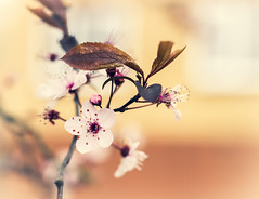 Welcome spring 2019 (Julie Greg) Tags: flower flowers tree soft colours canon canon77d spring