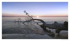 Darß | Westküste (Der Zeit die Augenblicke stehlen) Tags: hth westküste dars halbinsel peninsula sunset sommer sonnenuntergang baum wasser strand