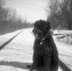 Waiting For A Train In Vain (BunnySafari) Tags: yashicamat124g yellowfilter railwaytracks fp4 march turfgrasswalk monty winter sunnyday bw 2019 hc110 film fpp