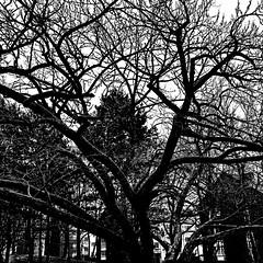 black mood (j.p.yef) Tags: peterfey jpye yef tree dark monochrome bw sw park square iphone digitalart photomanipulation