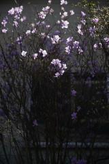 20190320a73_6251 (Gansan00) Tags: lce7m3 α7ⅲ sony japan 大分県 oita 日本 beepu 別府 landscape snaps ブラリ旅 03月 fe24105f4