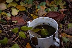 Cup of Tea... (GelbGleb) Tags: colored цветное фото photo forest лес leaves листья белый white зеленый желтый красный yellow green red