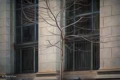 Belated Spring (buffdawgus) Tags: baretree spring sanfrancisco urbanscene financialdistrict urbanamerica leftcoast lightroom6 topazstudio sacramentostreet canonef24105mmf4lisusm canon5dmarkiii california
