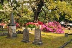 DSC_8900 (scsmitty) Tags: princegeorgewinyahchurch cemetery gravestone azaleas georgetownsc georgetown