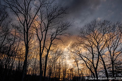 20190330 Orange Sky at Night 23705 (Laurie2123) Tags: fujixt2 fujinon1855mm laurieabbottturner laurieabbotthartphotography laurietakespics colorsofthenight sunset silhouette odc odc2019 ourdailychallenge