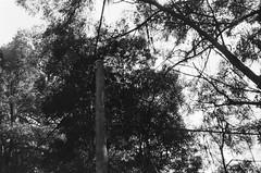 Utility pole (2) (Matthew Paul Argall) Tags: spartus35fmodel400 35mmfilm blackandwhite blackandwhitefilm kentmerepan100 100isofilm utilitypole
