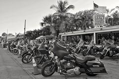 Harley parking at Earl's Hideaway & Tiki Bar (Bluescruiser1949) Tags: harleys harley harleydavidson motorcyles bikers sunday tradition sebastian florida beer blues contemporaryblues bw earls earleshideaway music musicians party goodtimes dancing sandbar 1946