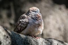 Dans la volière de Hong Kong Park (Seb & Jen) Tags: hongkong asia asie park parc island oiseau voliere bird