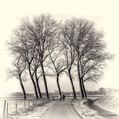 A walk in the forest :-) (Ruud.) Tags: ruudschreuder nikon nikond850 d850 bw zwartwit monochrome blackandwhite blackwhite trees tree walking