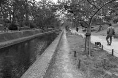 riverside park (Hideki Iba) Tags: riverside park shukugawa nishinomiya hyogo japan 2470 nikon d850 monochrome blackandwhite bw 白黒 黑白 tree cherry sakura water