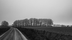 the road to Christmas (Redheadwondering) Tags: sonyα7ii salisburyplain wiltshire trees christmas landscape track byway copse mist misty blackwhite bw sonyf1450mmlens