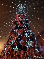 Christmas Tree (Marta Hyun) Tags: chuch beautiful buildings building cathedral old antiguo architecture arquitectura aragon aesthetic christmas tree trees lights luces navidad arbol zgz zaragoza bonito