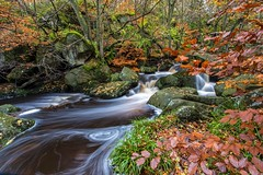 Padley Gorge (gavsidey) Tags: burbage brook derbyshire ngc d500 padley gorge stream trees autumn orange rocks beech tree