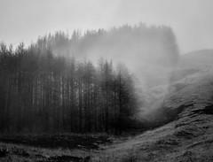 Glen Etive (Andreas Gugau) Tags: schottland unitedkingdom gbr natur nature nebel fog mist wolken clouds blackandwhite scotland uk glen etive britain wood forest bäume wald mountains berge hills highlands hügel phaseone