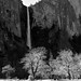 Bridalveil Fall and Oak trees