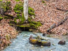 IMGPJ47999_Fk - Horseman Hide-A-Way Campground Spring (David L. Black) Tags: corydon indiana unitedstates us cave olympusomdem1mkii olympus1240f28