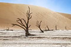 _RJS4654 (rjsnyc2) Tags: 2019 africa d850 desert dunes landscape namibia nikon outdoors photography remoteyear richardsilver richardsilverphoto safari sand sanddune travel travelphotographer animal camping nature tent trees wildlife