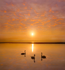 3 Swans on the Shore (adrians_art) Tags: muteswans birds beachshorecoast seawater tide skyclouds sunrisesunset silhouetteshadow reflections goldyellow red