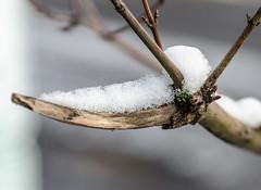 Resting Snow. (Omygodtom) Tags: d7000 white snow wet outside oregon macro bokeh soft tamron90mm tamron usgs