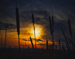 Cattail Sunset (Ray Mines Photography) Tags: sunset evening winter montana outdoors nature scenic landscape vibrant colors dark cattails