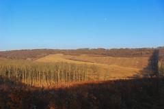 Woodland (Péter Vida) Tags: woodland waldland lands landscape landscahft dingle natural natur erdős vidék természet táj hungary zalai dombság moon hold