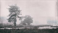 Landscape (Eva Haertel) Tags: eva haertel landscape landschaft monochrom monochrome schnee snow wasser water see lake tümpel teich pond pool gras grass trees bäume silhouette texture structure