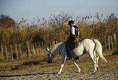 _DSC0649 (chris30300) Tags: camargue cheval