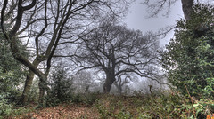 Misty (ArtGordon1) Tags: hollowpond eppingforest leytonstone london england uk winter february 2019 davegordon davidgordon daveartgordon davidagordon daveagordon artgordon1 misty mistymorning