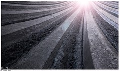 Rillen / grooves (Reto Previtali) Tags: acker landwirtschaft agriculture agrarwirtschaft linien geometrie symmetrie erde earth essn food nahrung felder bauer farmer licht light sonne sun lichtstrahl beam traktor tractor industrie technik apple flickr iphone iphonese nikon nikkor digital natur outside sunset nature landscape bw blackandwhite