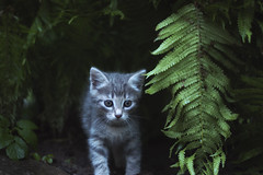 My Kitten (Austinbad) Tags: kitten cat green mystic cute coldtone dark memories holiday summer wet detail deep tone tones outdoor light bokeh contrast photo picture canon fade animal pet shadow delicate focus gallery home lights