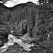 The Stehekin River with a Backdrop of Evergreens and Mountains (Black & White, North Cascades National Park)