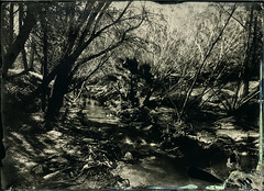 Limekiln Canyon Creek I (Blurmageddon) Tags: largeformat 5x7 senecaimprovedview wetplatecollodion alternativeprocess landscape nature bostickandsullivan newguycollodion nicksdeveloper limekilncanyonpark porterranch california tintype alumitype epsonv700