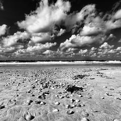 Muscheln und Wolken auf Baltrum