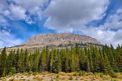 Canadian Rockies (Per@vicbcca) Tags: sony alberta rx1 dscrx1 canadianrockies landscape photographiadepaisaje montaña forest trees hwy40