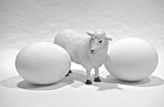 A Sheep Between Two Eggs on White (ricko) Tags: white eggs sheep toy stilllife werehere 41365 2019