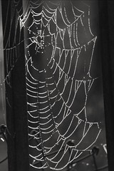 #photo #photos #pic #pics #picture #pictures #snapshot #art #beautiful #instagood #picoftheday #photooftheday #color #all_shots #exposure #composition #focus #capture #moment #paolocrocefotografo #italia360gradi #fotografia #instagramitalia #fotoitaliane (paolocrocefotografo) Tags: photooftheday paolocrocefotografo color focus instagramitalia pic photos unafotoalgiorno pictures moment beautiful italia365 composition fotoitaliane italia360gradi pics instagood art scattoitaliano photo capture fotodelgiorno picture fotografia fotoinpellicola picoftheday italyloveyou allshots exposure snapshot