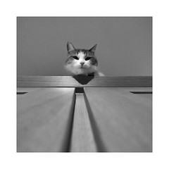 What ? (CJS*64) Tags: panasonic panasoniclx100 lx100 cat pet feline blackwhite bw blackandwhite mono monochrome cjs64 craigsunter cjs