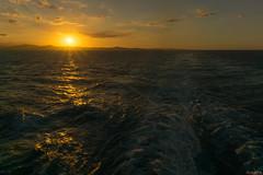Sunset - Coucher de soleil - Amber Cove, Republique Dominicaine - 8931 (rivai56) Tags: sunsetcoucherdesoleil ambercove republiquedominicaine 8931 beauté du soleil au coucher derrière le sillage dun bateau