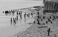 London - Beachcombers (philk_56) Tags: london river thames bank beachcomber blackandwhite monochrome